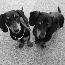 Penny & Bruno